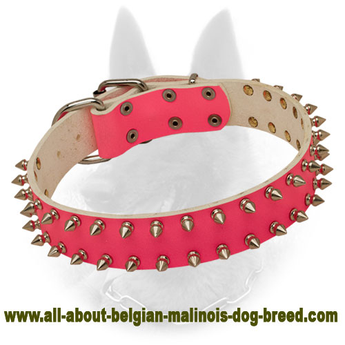 Fabulous Pink Belgian Malinois Collar with Spike Decoration