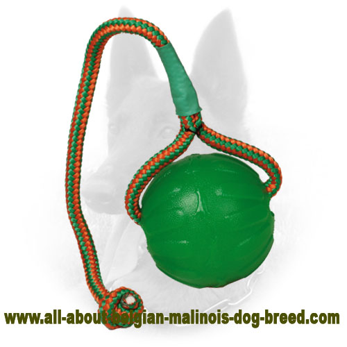 "Chewing Belgian Malinois Rubber Ball ""Roll and Throw"""