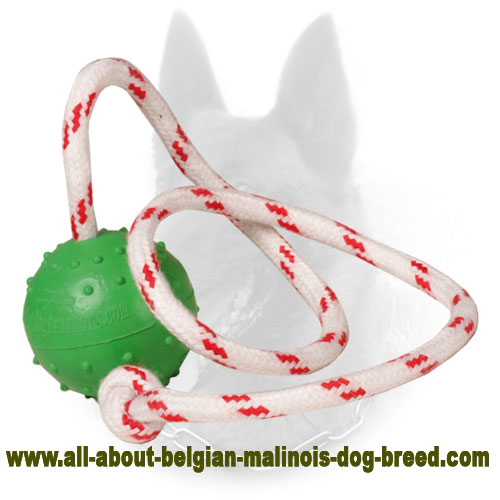 """Joy & Train"" Belgian Malinois Water Bite Ball - Small"