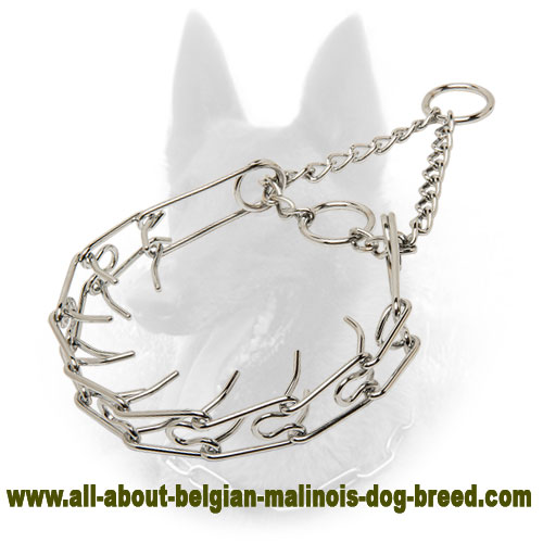 """Like a Mama's Pinch"" Belgian Malinois Collar of Chrome Plated Steel - 1/10 inch (2.3 mm)"