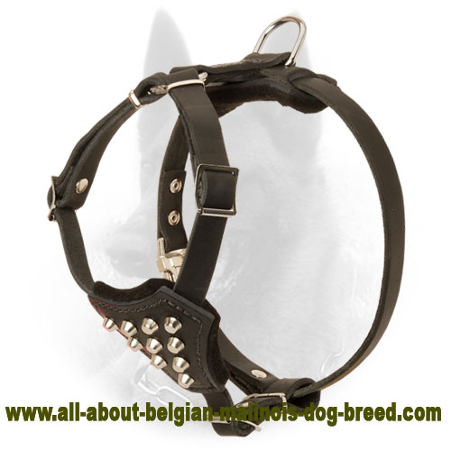 Classy Belgian Malinois Harness with Stud Decoration for Puppies