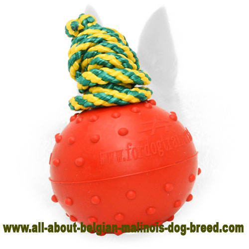 Rubber Belgian Malinois Water Ball on a String for Large Dogs