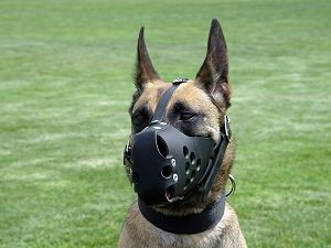 no barking dog muzzle