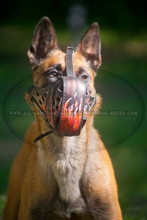 Uncommon Leather Belgian Malinois Muzzle with Hand Painted Red Flames