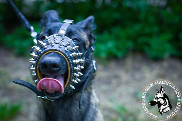 Belgian Malinois leather muzzle with rust-proof hardware for improved control
