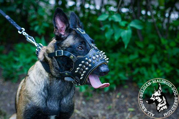 Belgian Malinois leather muzzle to prevent barking