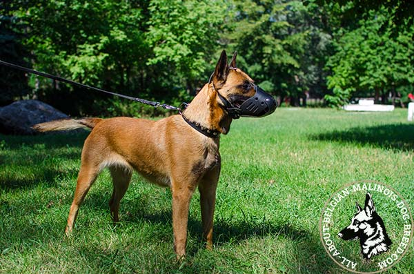 Adjustable Belgian Malinois leather muzzle