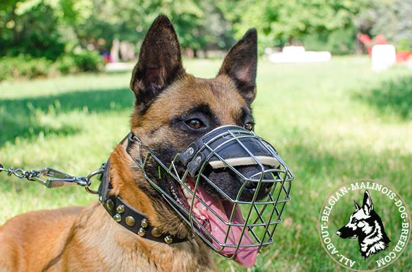 Belgian Malinois muzzle with ventilated cage