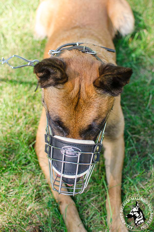 Belgian Malinois muzzle with padding