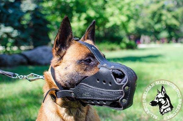 Strong Belgian Malinois leather muzzle