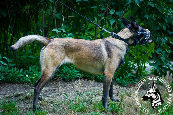 Belgian Malinois muzzle with luxurious padding