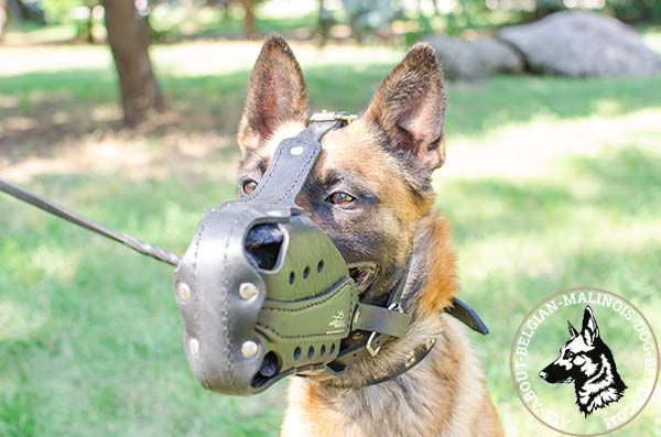 Padded with felt Belgian Malinois muzzle