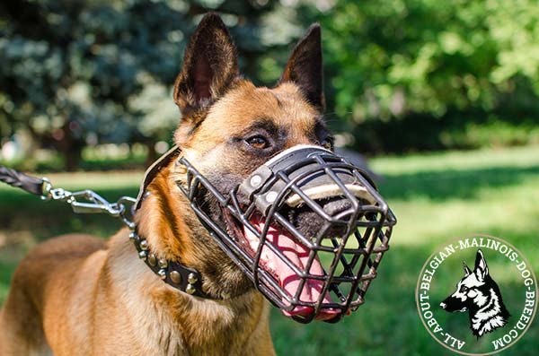 Wire cage padded Belgian Malinois muzzle