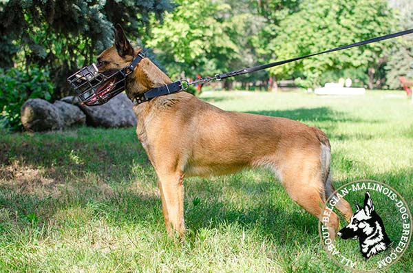 Easy to breathe Belgian Malinois muzzle