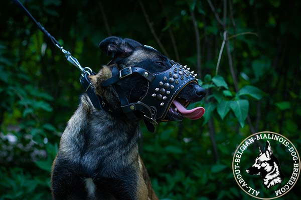 Belgian Malinois muzzle with brass studs and nickel spikes
