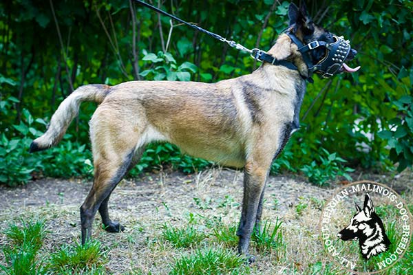 Belgian Malinois muzzle for visiting public places