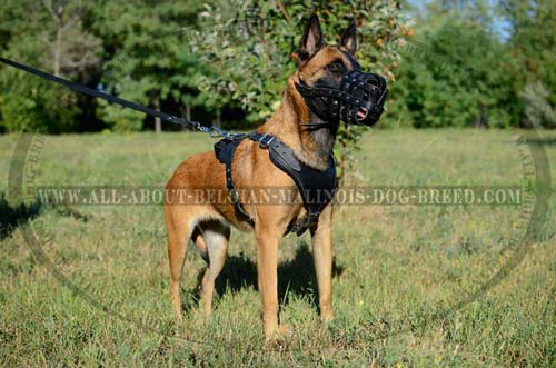 Super Belgian Malinois Leather Free Ventilation Dog Muzzle