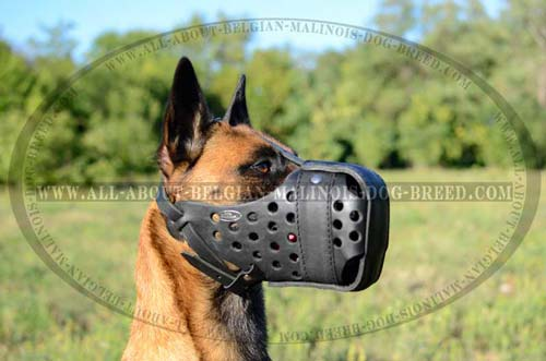 Comfy Belgian Malinois Dog Leather Muzzle Easy Training Activities