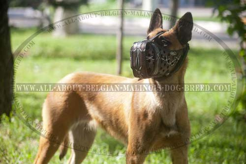 Malinois Leather Padded Muzzle With Barbed Wire Coloring