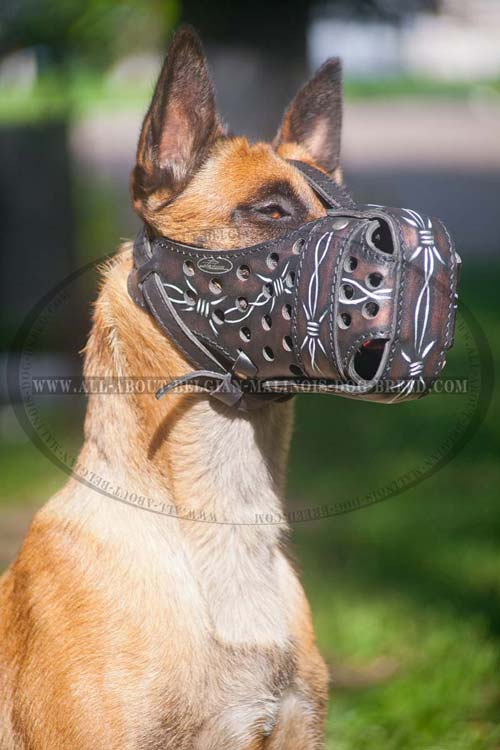 Modern Malinois Muzzle Barbed Wire Hand Colored