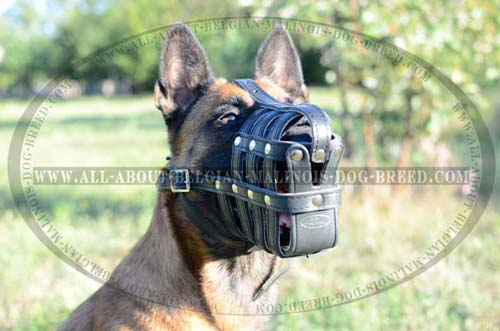 Durable Leather Belgian Malinois Dog Muzzle