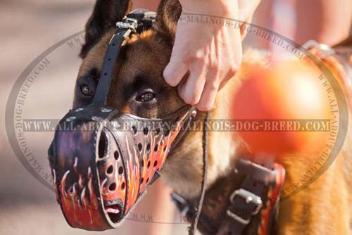 Malinois Uncommon Muzzle With Burning Fire Handcrafted  Painting