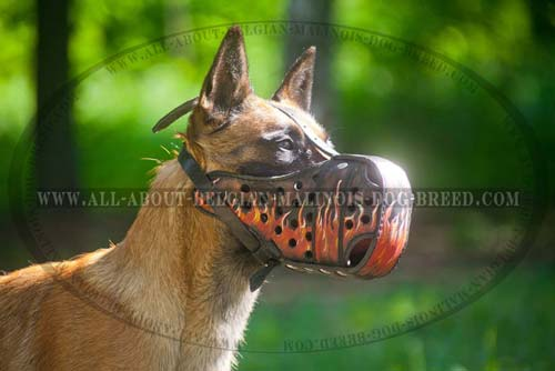 Malinois Leather Muzzle Hand Colored Fire Image