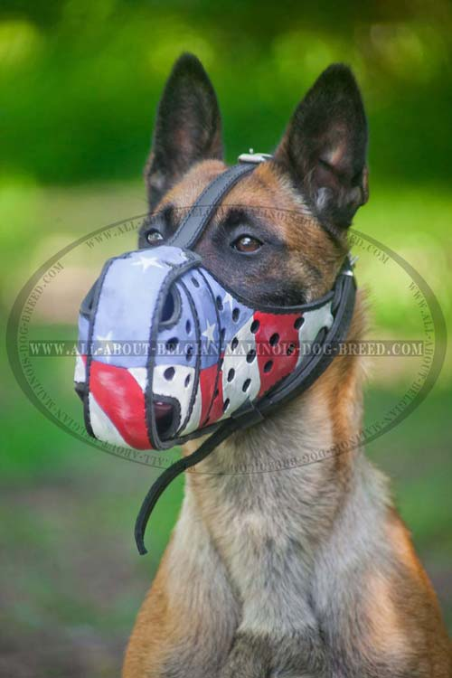 Perfectly Ventilated Painted Leather Belgian Malinois Muzzle