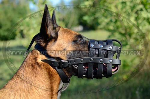 Comfy Belgian Malinois Dog Muzzle For Training  Activities